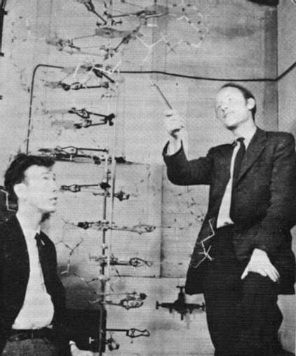 Watson Und Crick